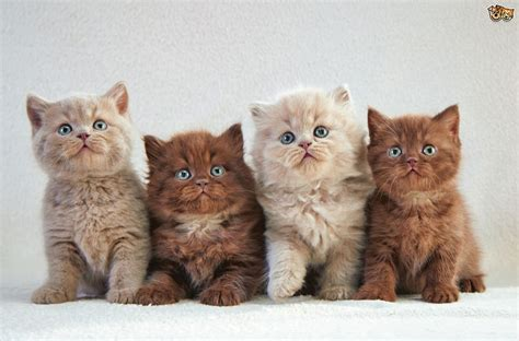 Kitten Images How To Recognise Taurine Deficiencies In Kittens Pets4homes