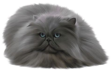 persian cat clipart transparent white pencil