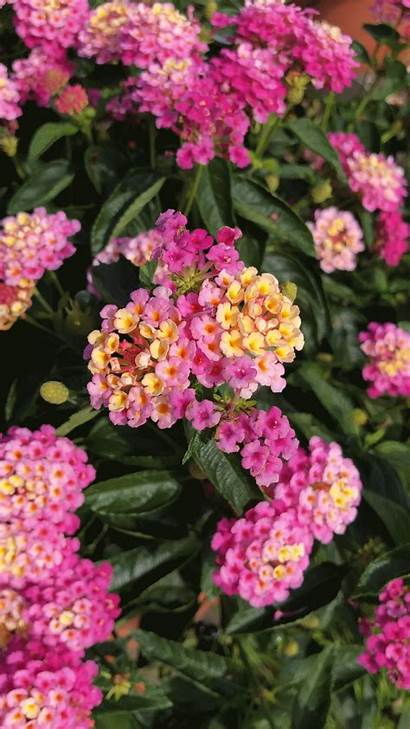 Flowers Garden Sun Container Flower Gardening Spring