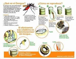 EMS SOLUTIONS INTERNATIONAL marca registrada: INFORMACION SOBRE EL DENGUE / GUÍA PARA MANEJO