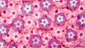 Cute Flower Backgrounds wallpaper - 1405000