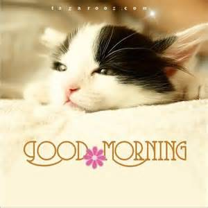 Good Morning Cat