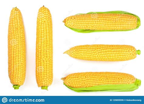 ear  corn isolated   white background top view set