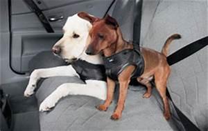 Hundegurt Fürs Auto : bmw hunde sicherheitsgeschirr ~ Kayakingforconservation.com Haus und Dekorationen