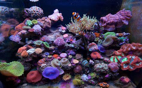 Animated Reef Wallpaper - reef tank wallpaper wallpapersafari