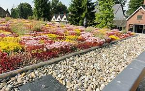 Extensive Dachbegrünung Pflanzen : gr ndach systeme privatkunden zinco ~ Frokenaadalensverden.com Haus und Dekorationen