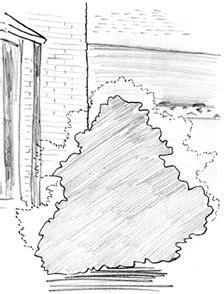 GardenAtoZ - Prune a dwarf falsecypress - Garden A to Z