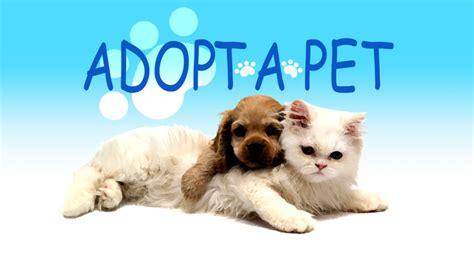 adopt  pet tuesday   news