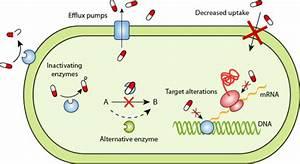 Resistance Mechanisms  U2013 Antibiotic Resistance  U2013 React