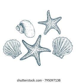 starfish images stock  vectors shutterstock