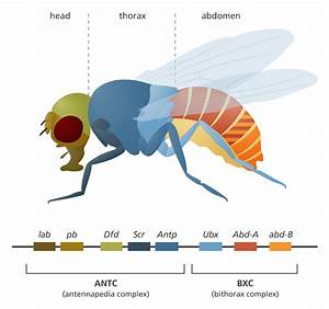 Simple Fly Diagram