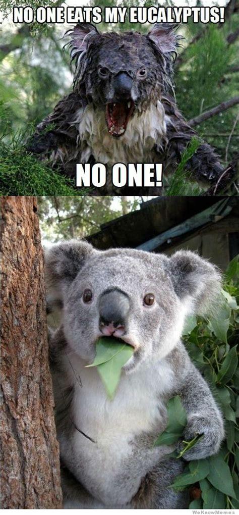 funniest koala meme    laugh memesboy