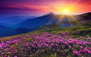 Beautiful Flower Landscape Wallpaper | Auto Design Tech