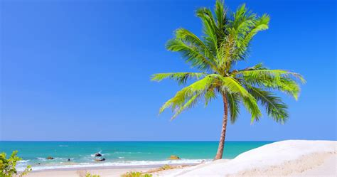 Vacation Background Images by Beautiful Palm Tree On Sea Shore At Summer Day