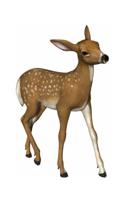 Deer Clipart Roe Animals Animal Clip Woodland