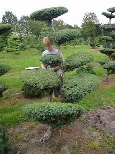 image gallery pflanzen garten With feuerstelle garten mit bonsai shopping