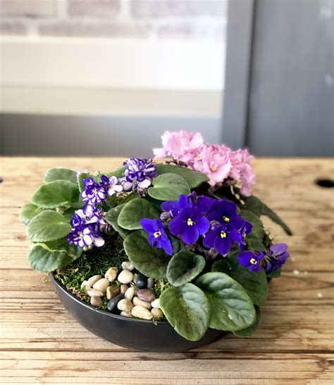 african violet planter violets pots watering self plants buying ultimate choose indoor