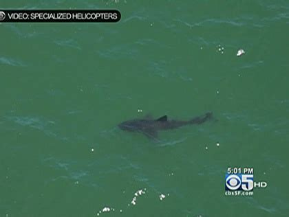 14-Foot Great White Shark Spotted Off Santa Cruz County