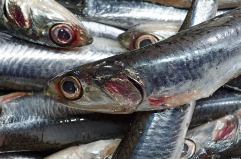 mercury fish cruelty seafood fishing levels eat animals sustainable treated entertainment did know safe cruel huffpost