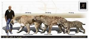 Smilodon populator | Wiki Prehistórico | FANDOM powered by ...