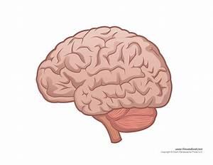 Brain Diagram - Blank