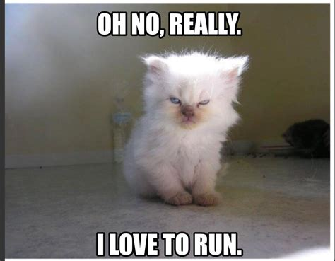 Fitness, Funny Fitness Meme, Angry Cat, I Hate Running, I