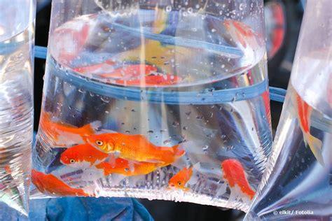 goldfisch krankheiten was tun bei pilzbefall co