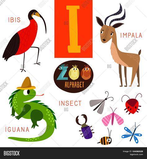 3 letter animals zoo alphabet vector amp photo free trial bigstock 20059   104060528
