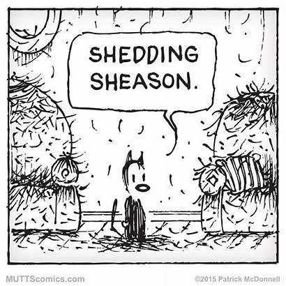 Cat Shedding Mutts Comics Season Dog Muttscomics
