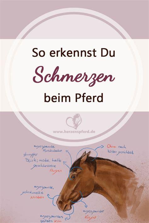 Training Für Arthrose Pferd