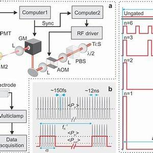 (PDF) Improved two-photon imaging of living neurons in ...