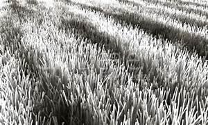 Teppich Schwarz Weiß Gestreift : teppich schwarz wei gestreift lizenzfreie bilder und fotos ~ Indierocktalk.com Haus und Dekorationen