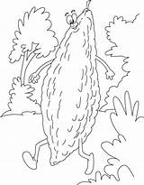 Gourd Bitter Coloring Pages Walking Drawing Getdrawings sketch template