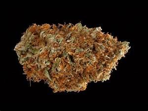 sanjay gupta weed 1