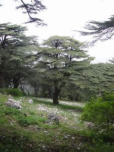 The Cedar Forests Of Lebanon | The Velvet Rocket