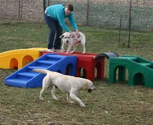 Lucky dog lodge dog activities for Dog playground equipment