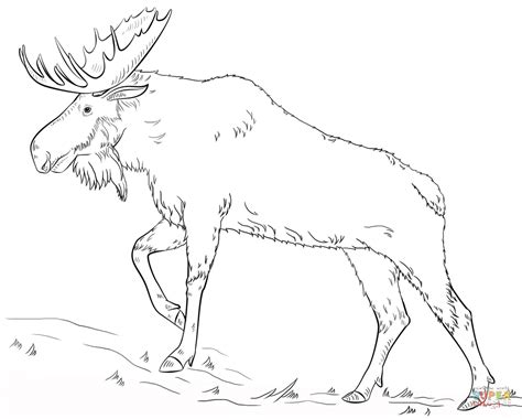 moose coloring pages walking moose coloring page free printable coloring pages