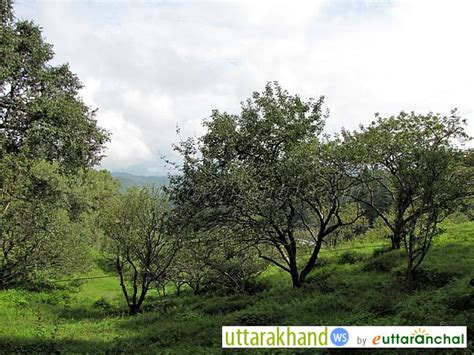 Cytotec Where To Buy Philippines Apple Orchard In Chaubatia Garden Uttarakhand Travel