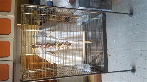 gabbia per pappagalli usata pettorina per pappagalli posot class