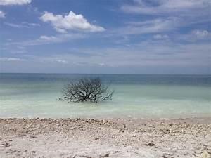 honeymoon island state park dunedin florida a short video With honeymoon island state park florida