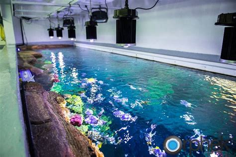 aquarium hotel in dubai aquariums and fishes fish care led lighting for aquariums