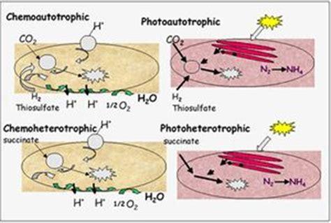 rhodopseudomonas palustris  extracellular electron