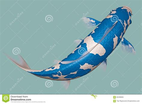 Carpe Koi Bleu Light Blue Koi Fish Stock Illustration Image 65298905