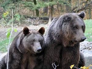 Tierpark Bad Mergentheim : attraktionen und fahrgesch fte im wildpark bad mergentheim tierpark in bad mergentheim ~ Watch28wear.com Haus und Dekorationen