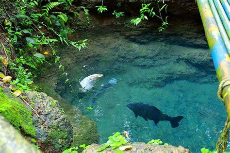 aquarium fishes  kerala aqua culture  thrissur