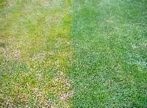 Ab Wann Rasen Vertikutieren : gelber rasen rasenm her tests ~ Lizthompson.info Haus und Dekorationen