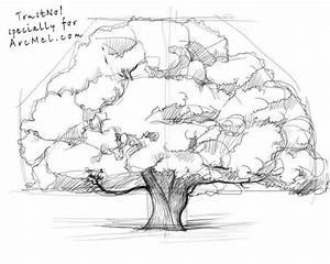 Old Oak Tree Sketch | www.pixshark.com - Images Galleries ...