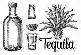 Tequila Lime Agave Salt Glass Tattoo Sketch Vector Illustration Drawing Bottle Plant Cactus Botlle Cocktails Hand Engraving Alcoholic Drawn Graphicriver sketch template