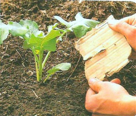 Organic Garden Pest Control For Getting Rid Of Vegetable