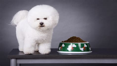 hills expanded dog food recall impacts pet families